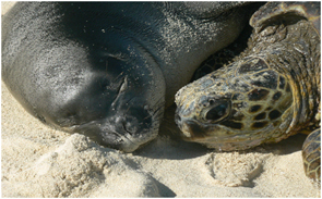Monk Seal and Green Turtle